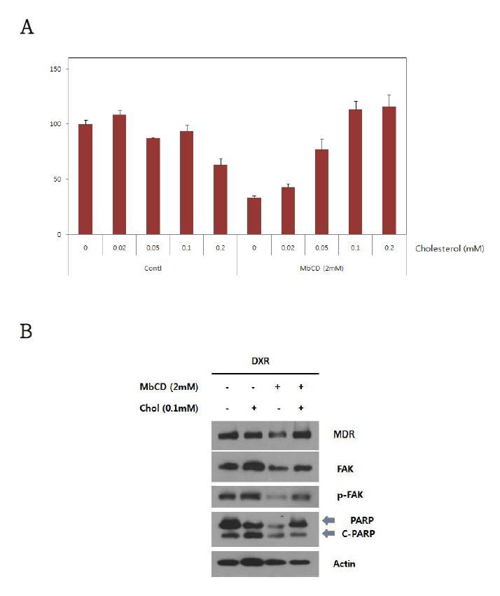 MbCD에 의한 세포사멸에 대한 cholesterol의 영향