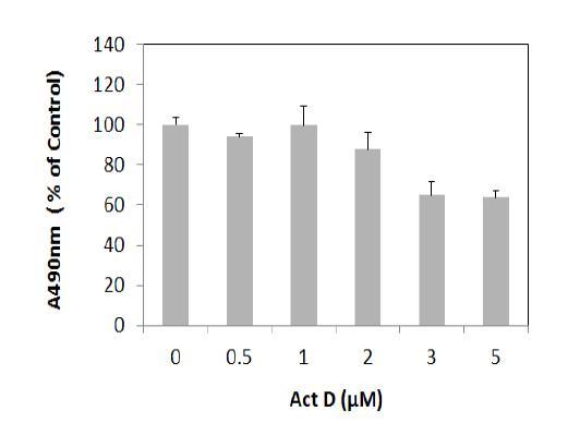 DXR cell에 대한 Actinomycin D의 영향