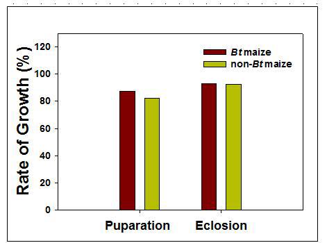 Bt와 non-Bt 옥수수를 섭식한 기장테두리를 포식하는 무당벌레의 용화율과 우화율