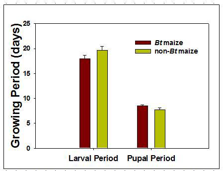 Bt와 non-Bt 옥수수를 섭식한 기장테두리를 포식하는 무당벌레의 성장기간