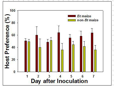 Bt와 non-Bt 옥수수를 섭식한 기장테두리를 포식하는 무당벌레 유충의 포식선호도