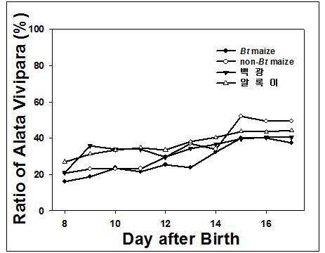 Bt, non-Bt, 백광, 알록이 옥수수 4종에 대한 기장테두리진딧물의 유시충 발생율