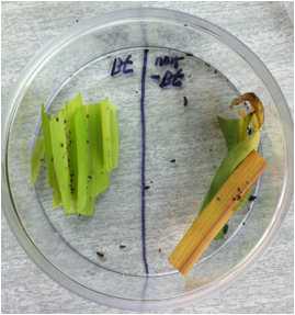 무당벌레 유충의 포식선호도