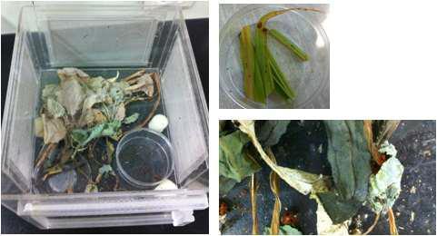 천적곤충으로 선정 된 무당벌레 사육