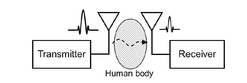 인체 전파손실 특성 분석