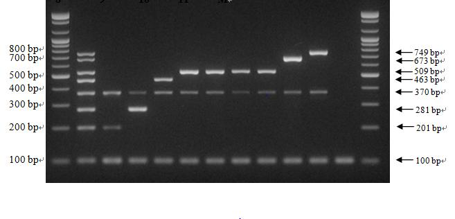 Multiplex PCR results using Listeria species type strains
