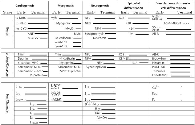 Summary of data showing the developmentally controlled expression patterns of ES-cell-derived cardiac, myogenic, neuronal, epithelial and vascular smooth muscle cell differentiation in vitro.