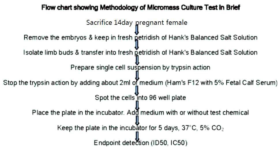 Micromass embryotoxicity assay 방법