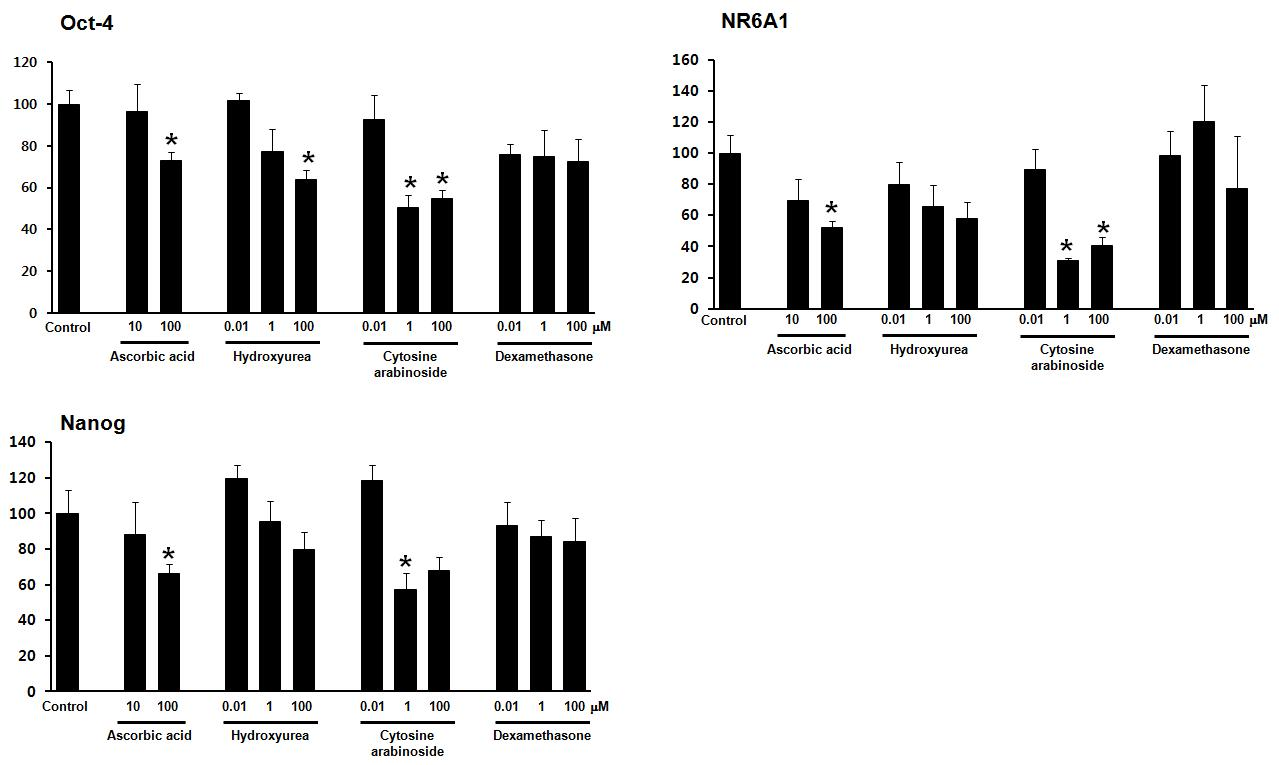 발생독성 물질(hydroxyurea, cytosine arabinoside, dexamethasone)과 음성대조물질 (ascorbic acid)에 의한 인간 배아줄기세포의 미분화능 유지 전사인자 유전자 발현 확인,