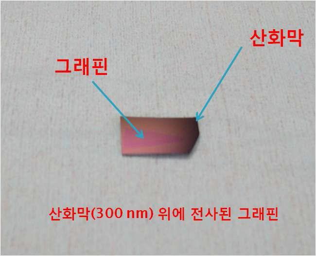산화막(300nm)이 성장된 실리콘 웨이퍼 위에 전사된 그래핀