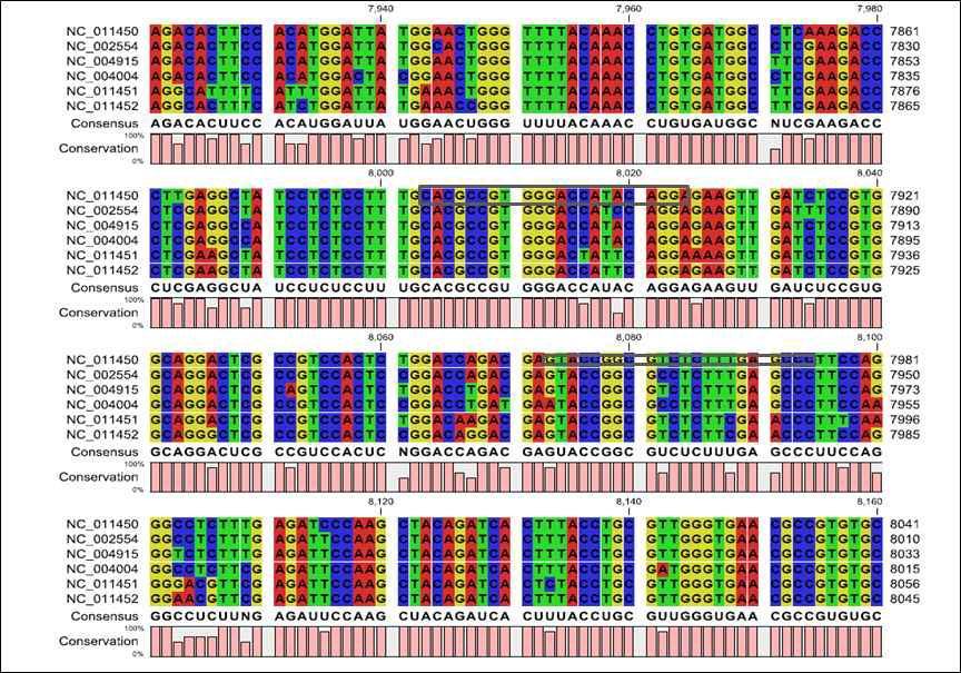 FMDV gene에서 유사성이 높은 3D의 혈청 타입별 sequence alignment