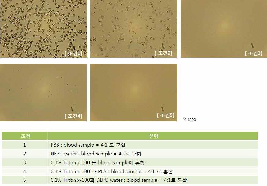 혈액 샘플의 cell lysis 결과