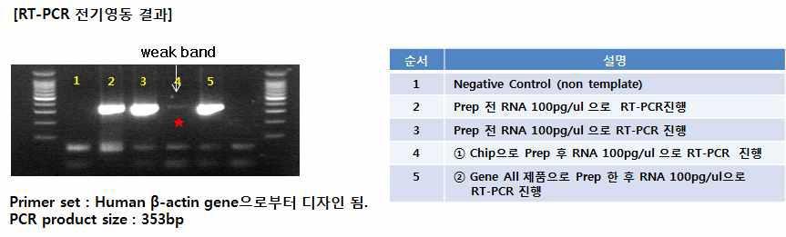 RNA prep의 각각의 전기영동 결과