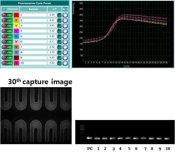 10채널 칩의 real-time PCR 및 전기영동 결과