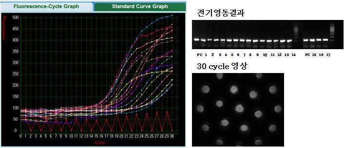 17칩의 real-time PCR 및 전기영동 결과