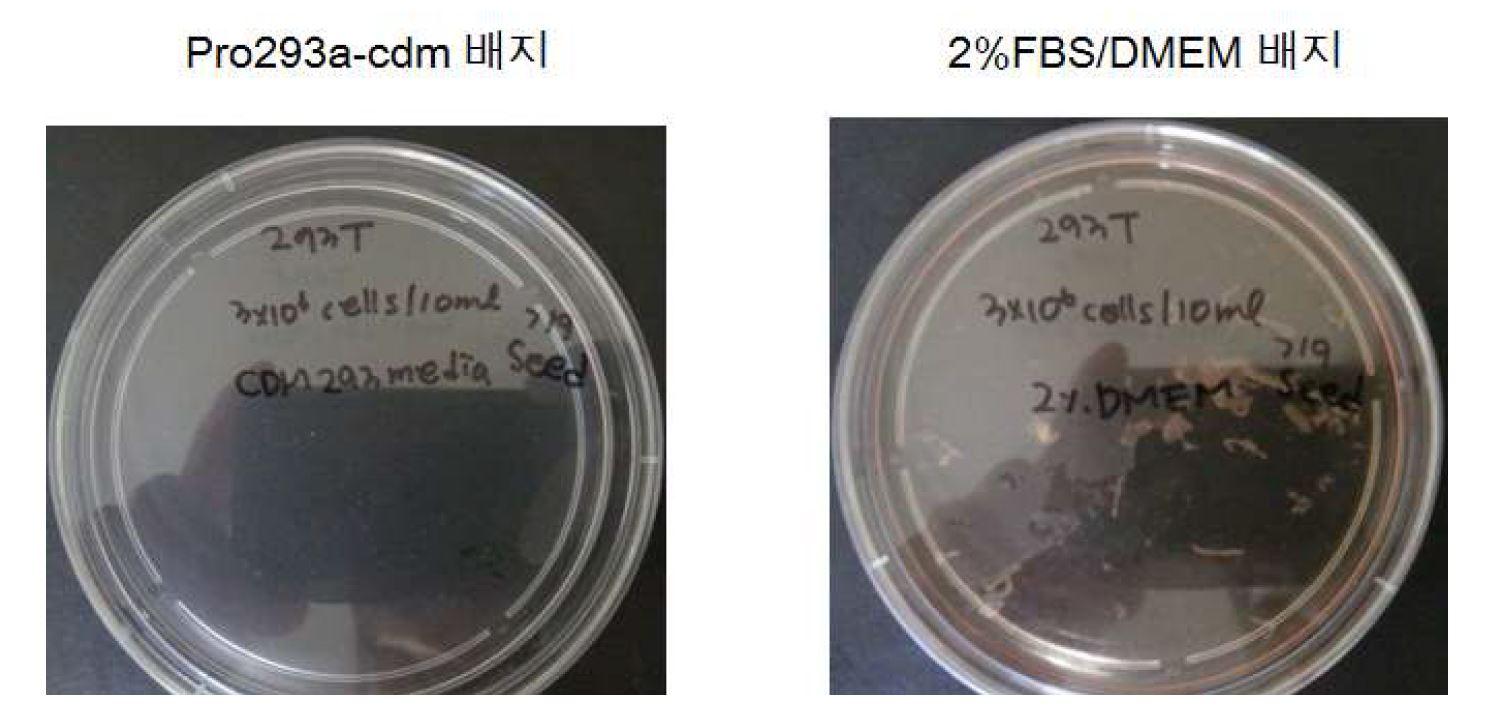그림 63. Transfection 후 수거시기에 따른 비교·분석(4번째 수거 후 모습)