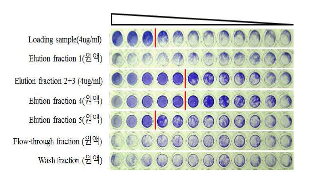 그림 66. Protein A resin을 이용한 정제 후 HzVSF의 활성 비교