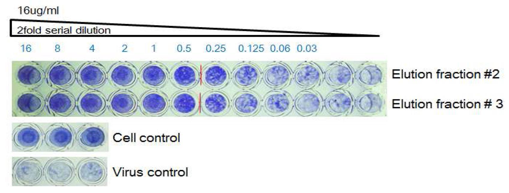 그림 67. 0.2M Glycin/HCl, pH 2.5에 의해 용출된 HzVSF의 활성