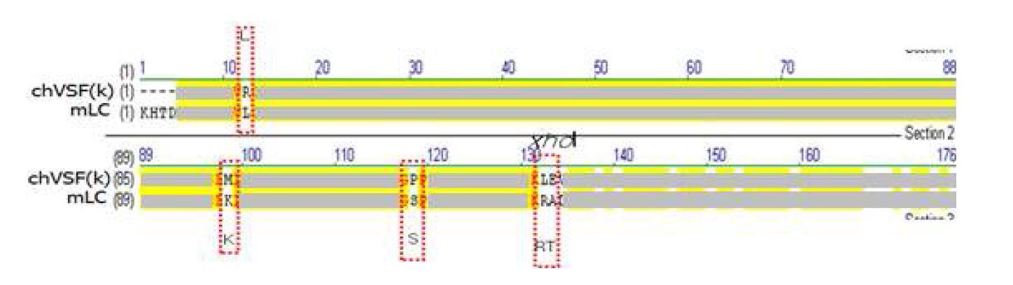 그림 1. 1세대 chVSF와 mVSF의 light chain 아미노산 서열 alignment