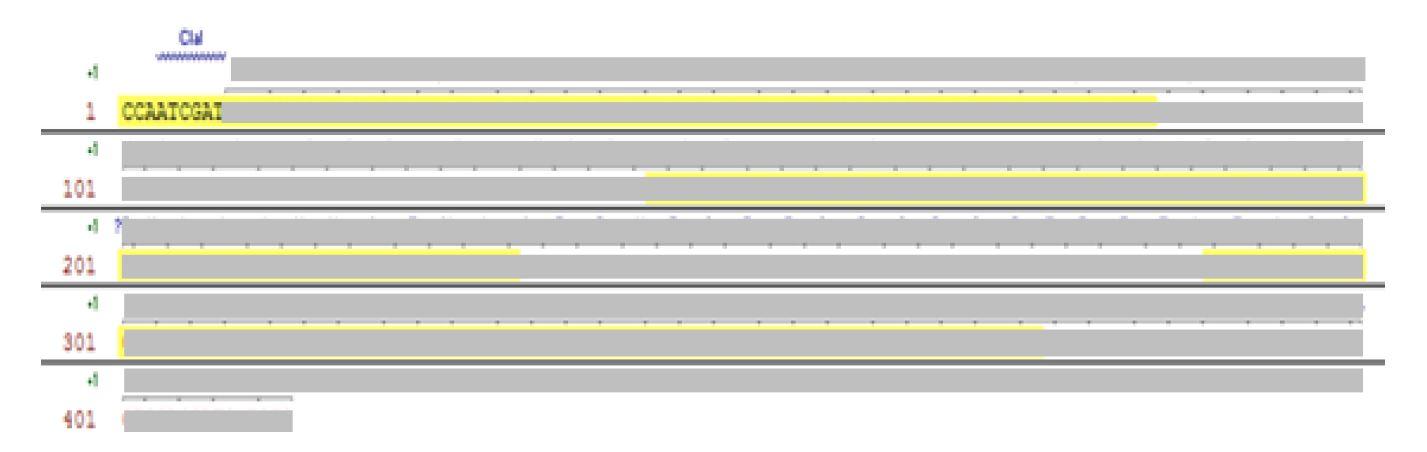 그림 12. Design한 HzVSF의 VL 유전자 서열