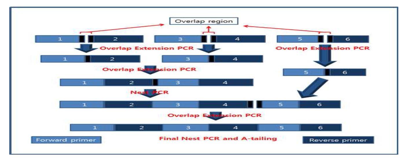 그림 15. HzVSF heavy chain variable region 제작을 위한 OE PCR 모식도