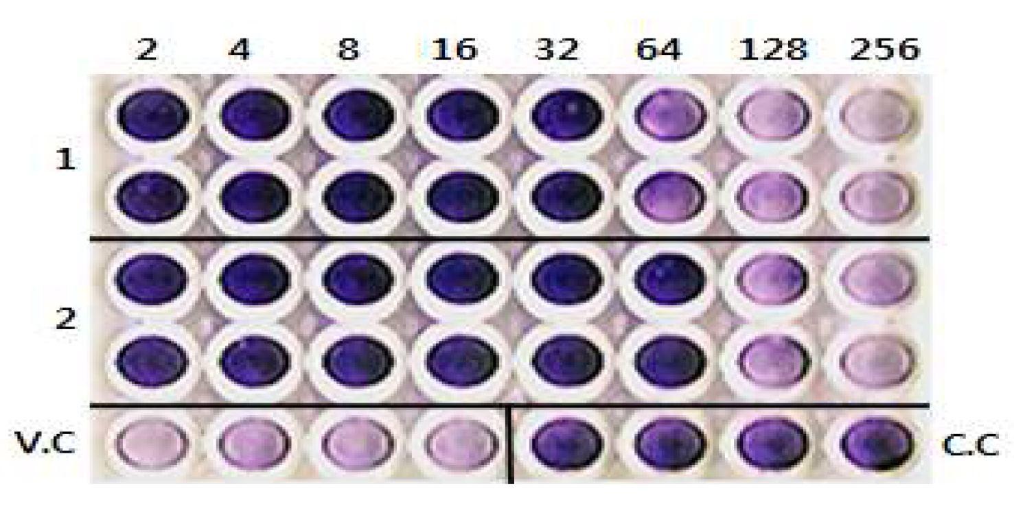 그림 32. 수정된 chVSF의 MVIT