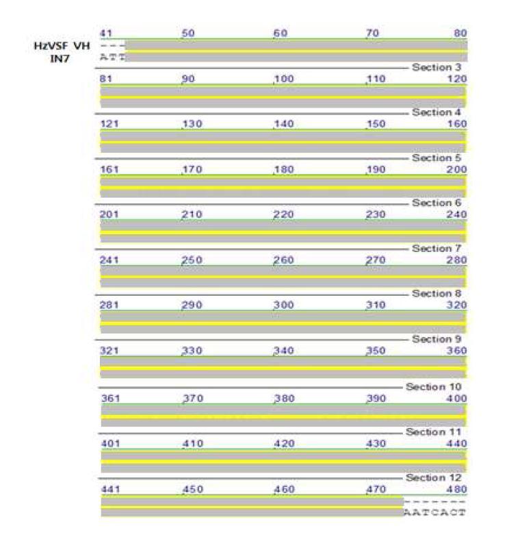 그림 47. colony 7번 sequencing 결과와 design된 HzVSF VH의 alignment 결과