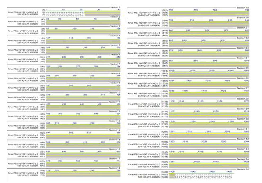 그림 53. hVH.hCγ2의 Sequencing 결과와 design된 HzVSF hVH.hCγ2의 alignment 결과
