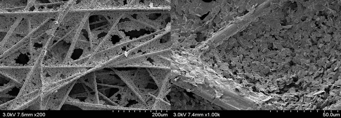 SGL사의 탄소종이 (25AA) SEM 사진