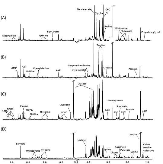 마우스의 각 장기별 조직 시료에 대한 대표 NMR 스펙트럼