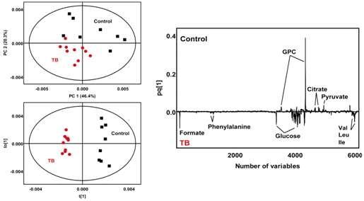 마우스의 혈청 시료에 대한 PCA 와 OPLS-DA score plot 및 loading plot