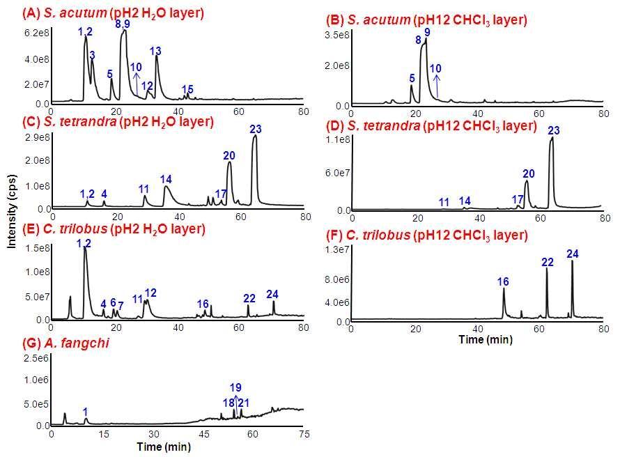 TICs of the extract of C. species.