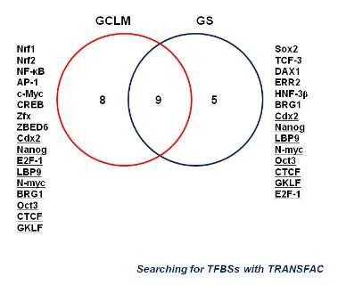 GCLM과 GS 프로모터에 바인딩하는 전사인자 분석