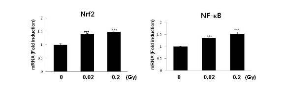 저선량 방사선조사에 의한 Nrf2, NF-κB 유전자 발현 확인