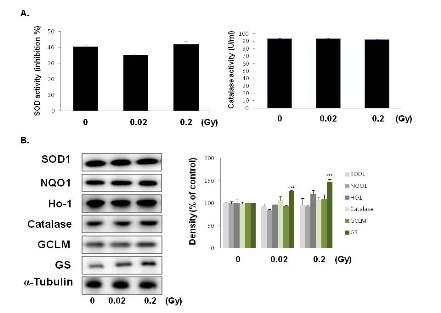 저선량 방사선조사에 의한 SOD1, HO-1, catalase, NQO1, GCLM, GS 변화 확인
