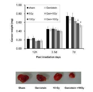 Genistein 의 방사선의 암치료에 미치는 영향