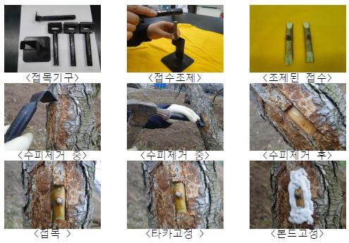 타카접목 기구와 타카접목 과정
