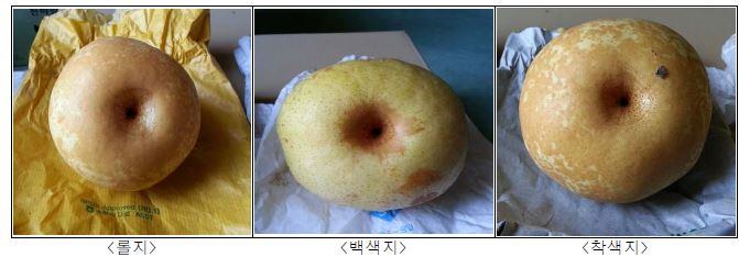 봉지종류별 '슈퍼골드' 품종의 과실외관