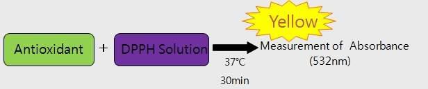 DPPH (1,1-diphenyl-2-picrylhydrazyl) 라디칼 소거능 측정방법