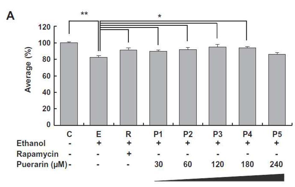 Ethanol이 처리된 H4IIE cell에서 puerarin의 농도에 따른 세포 생존