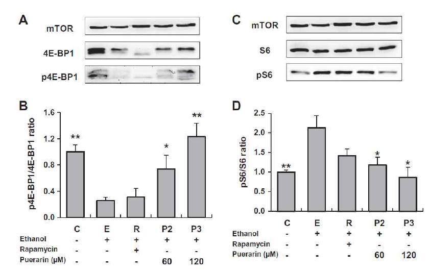 4E-BP1과 S6의 phosphorylation 비율의 변화