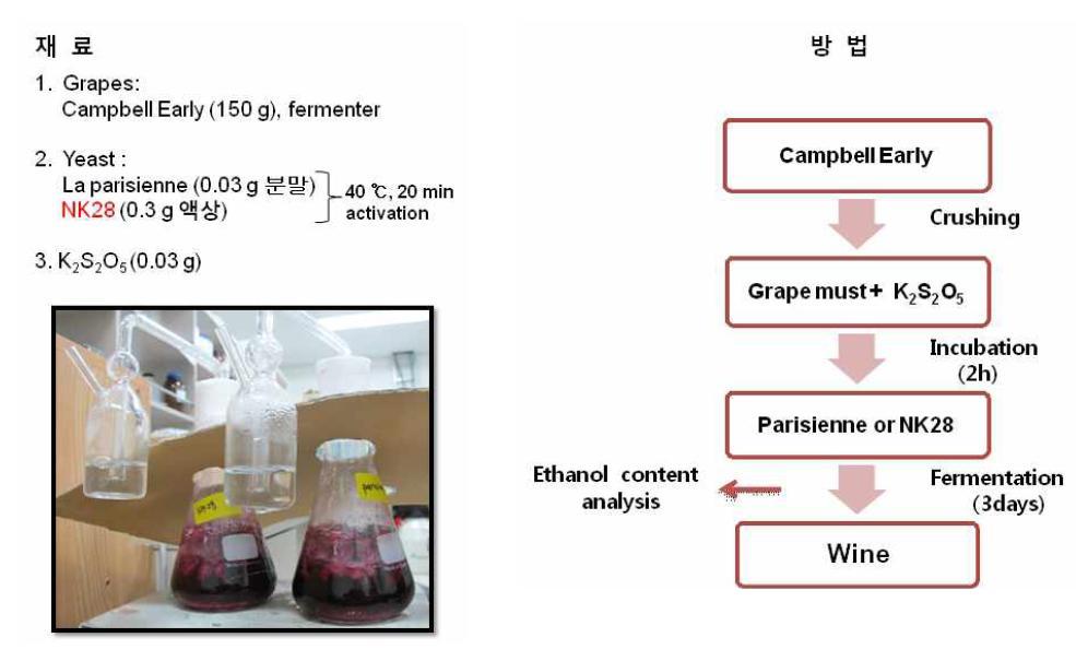 NK28을 이용한 포도주 발효 재료 및 방법
