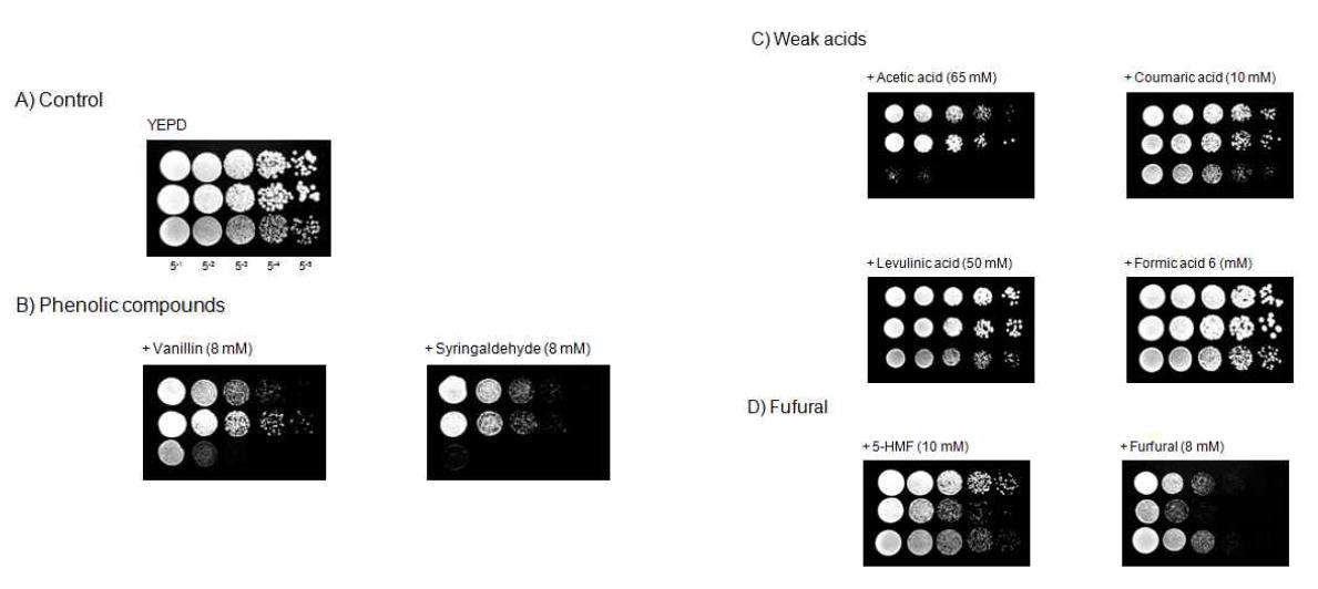 Growth phenotype assay of S. cerevisiae NK28, D5A, and BY4742.