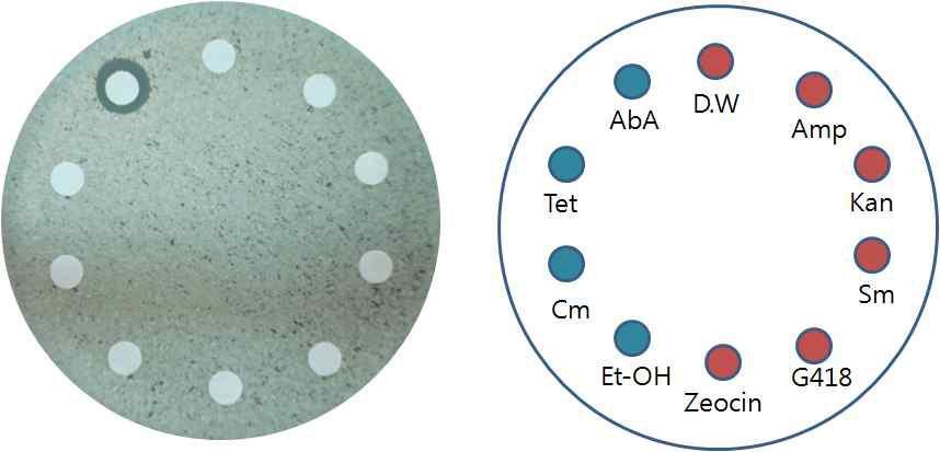 다양한 항균물질에 대한 NK28의 감수성 분석.
