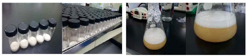 동결건조 상태로 생산된 NK28 및 재생장 확인.
