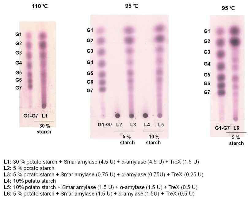 온도와 기질의 변화에 따른 효소반응 결과