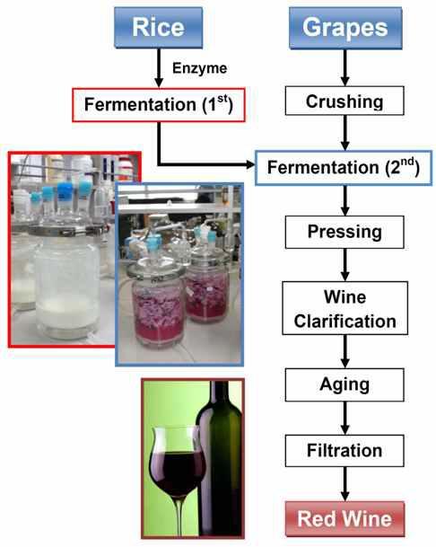 2단 발효를 이용한 포도주 제조과정