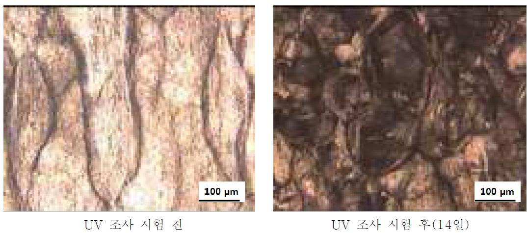 PS + Ce 3 wt% + PLLA/PBAT 9 wt% + MnO2 1 wt% UV 조사시험 전-후 광학현미경 사진