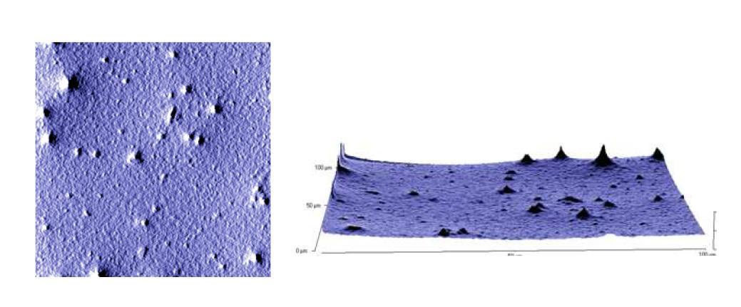 16wt% BaTiO3 slurry의 AFM 사진, RMS : 61nm