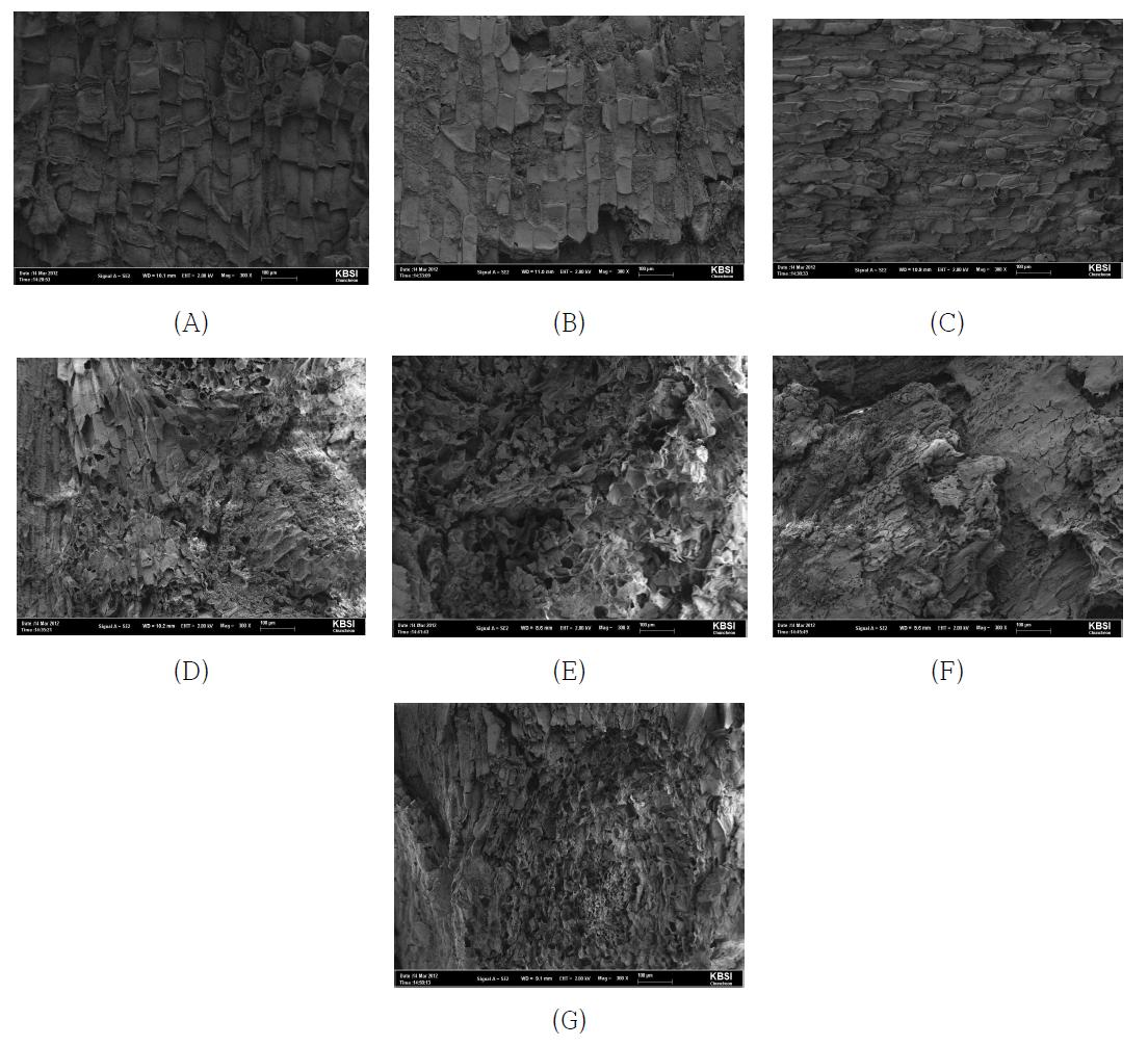 저진공주사현미경 (SEM, Scanning Electron Microscope)을 이용한 증숙 차수별 더덕의 조직 관찰